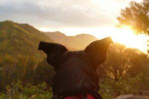 Nachhaltiger Hund im Gegenlicht