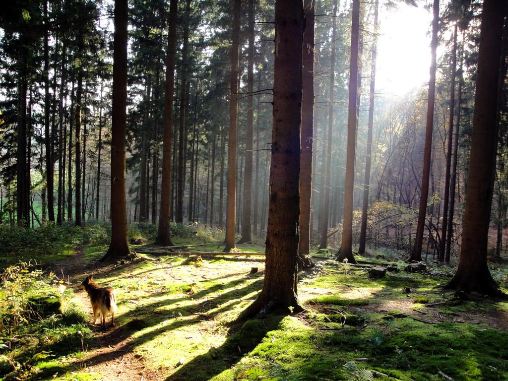 aida_märchenwald (Mittel)