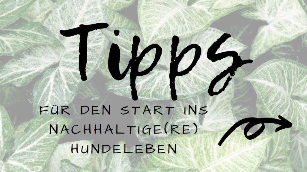Banner_Nachhaltigkeis-Tipps_sn