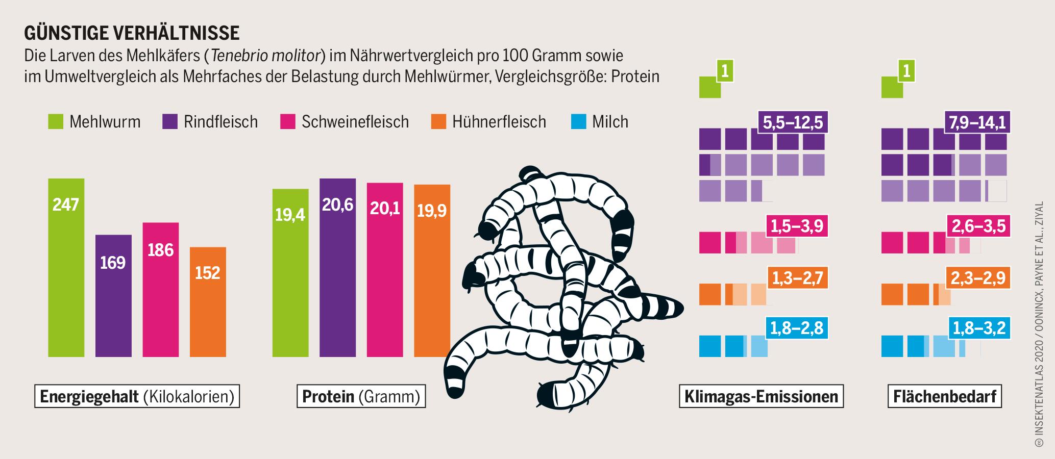 Quelle: Insektenatlas 2020 von BUND und Heinrich-Böll-Stiftung