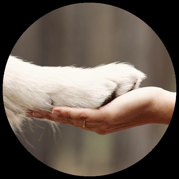 hand_pfote (Benutzerdefiniert)
